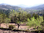 Spanish property for sale in: Farmhouses. Finca Rustica / Plot  !!! SOLD !!!