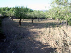 Spanish property for sale in: Farmhouses. Finca Rustica / Plot  -  42.069 - Euro