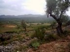 Spanish property for sale in: Farmhouses. Finca Rustica / Plot  - 243.122 - Euro