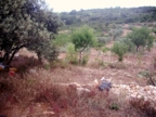 Spanish property for sale in: Farmhouses. Finca Rustica / Plot  - 551.078 - Euro