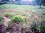 Spanish property for sale in: Farmhouses. Finca Rustica / Plot  -  48.080 - Euro