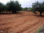 Spanish property for sale in: Farmhouses. Finca Rustica / Plot  -  31.553 - Euro