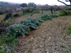 Spanish property for sale in: Farmhouses. Finca rustica / plot - 371.000 - Euro